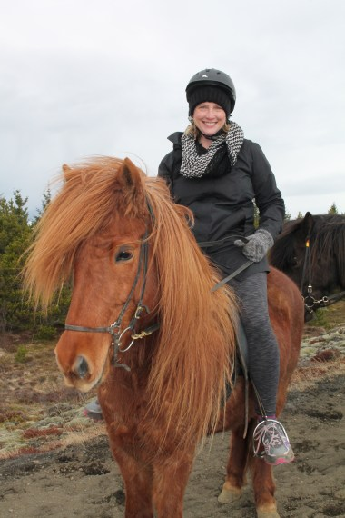 Iceland molly horse (2)