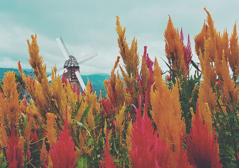 Exploring Cebu's Little Amsterdam: A Sirao Flower Garden Travel Guide