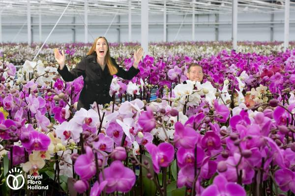 Aalsmeer Flower Auction | Aalsmeer, The Netherlands | The Travel Medley