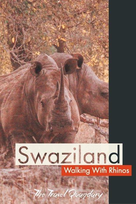 Pin Photo   A walk with rhinos in Swaziland