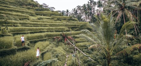 A man and woman dressed in white walk along the rice fields of Tegallalang Rice Terrace in Ubud, Bali