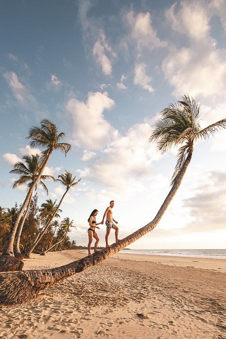 A couple walk along a bendy palm tree on Mission Beach at sunrise, Queensland