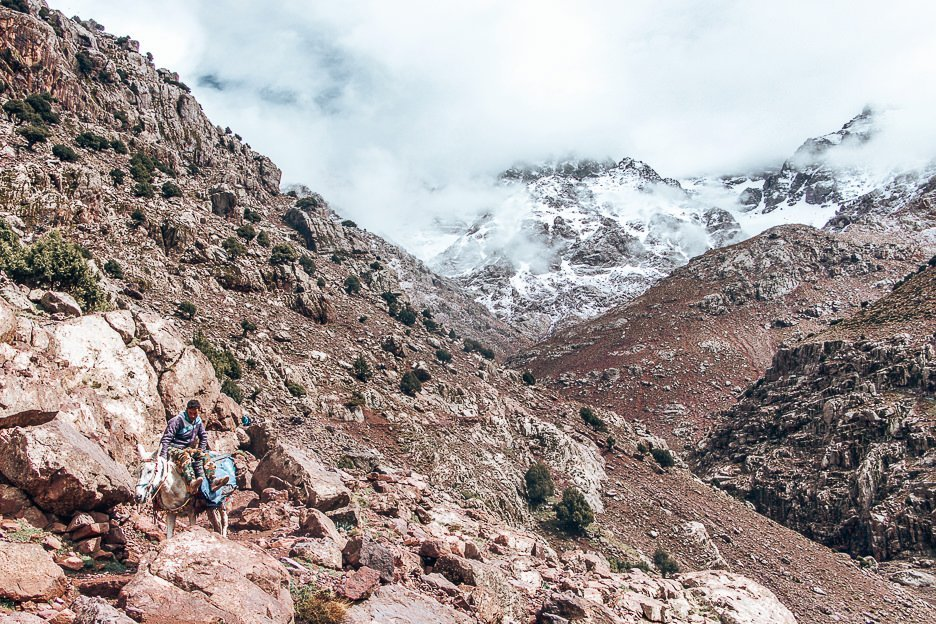 Donkey carrying supplies in the Atlas Mountains, Morocco