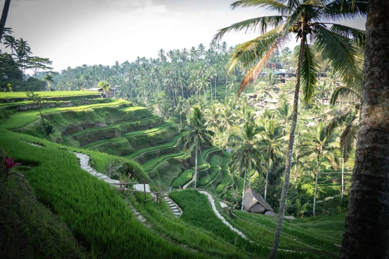 Ubud Waterfall Tour - Tegalalang Rice Fields