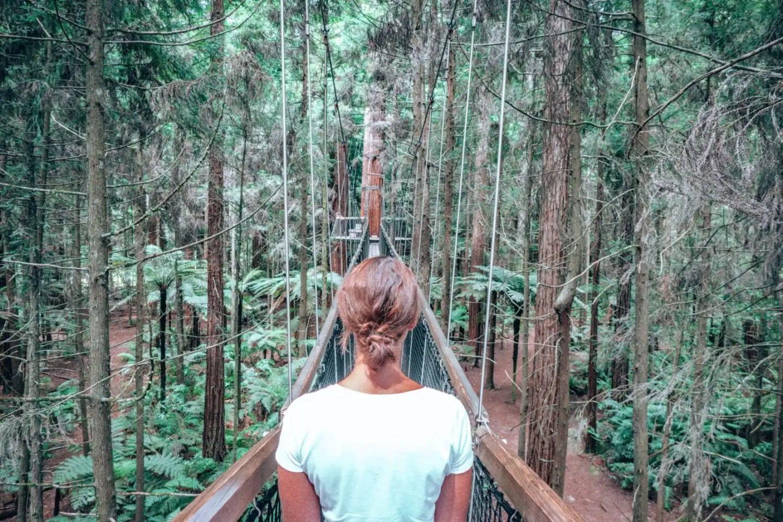 Redwoods treetop walk, Rotorua
