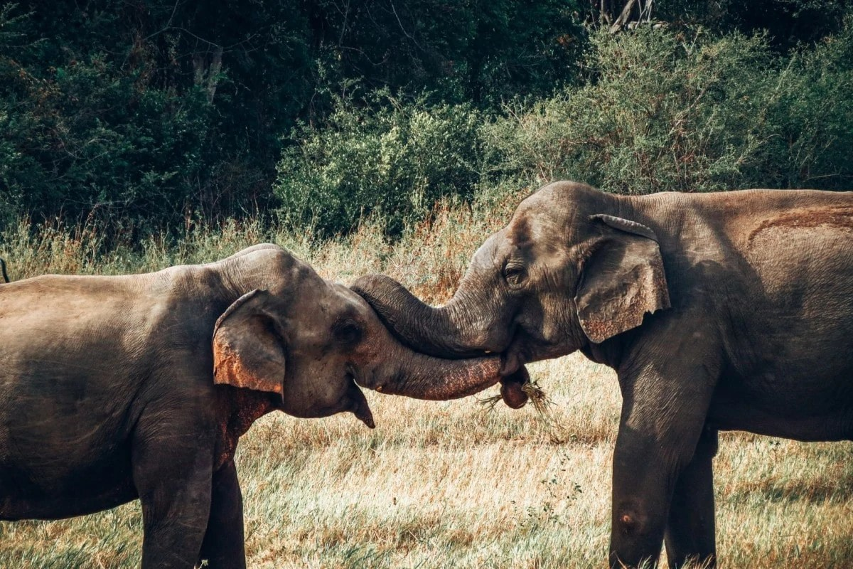 Landmarks in Sri Lanka - Yala National Park