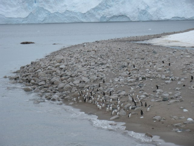 Antarctica8