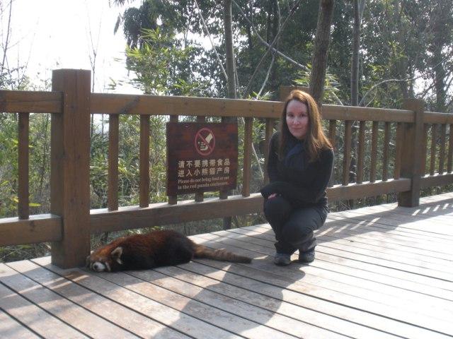 chengdu panda base red pandas chengdu china in 2 days