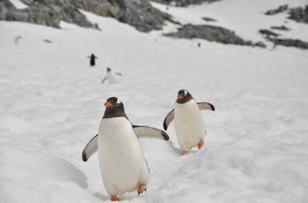 7 Best Things to do in Antarctica