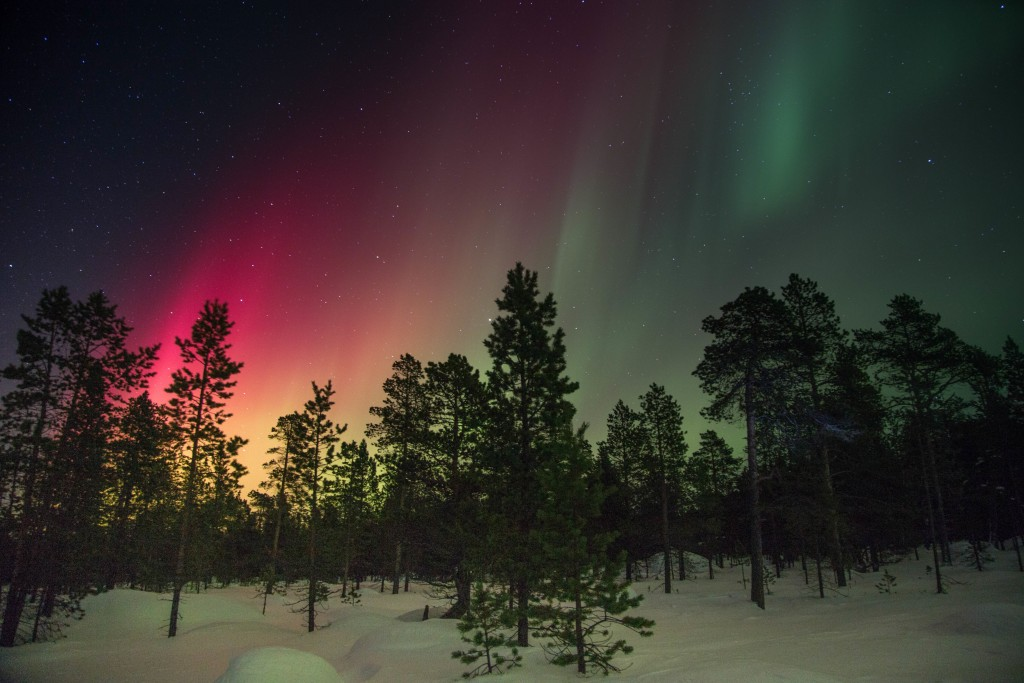 group of trees with northern lights in the background