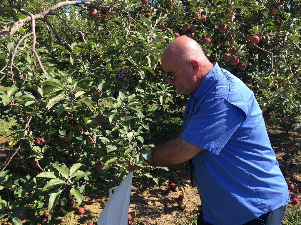 Incredible things to do in Ellijay, GA - picking apples
