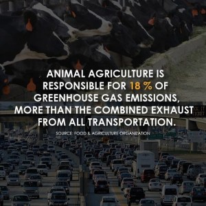 One of @cowspiracy's many informative posts.
