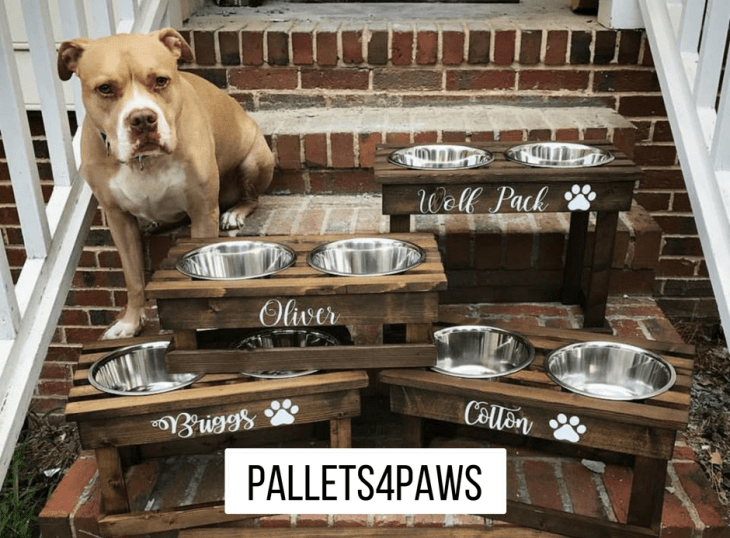 Pallets 4 Paws