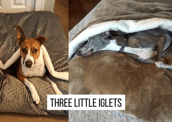 Three Little Iglets