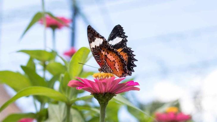 pollinator friendly garden butterfly pollen flower