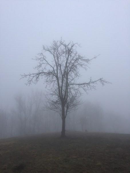 scenery20