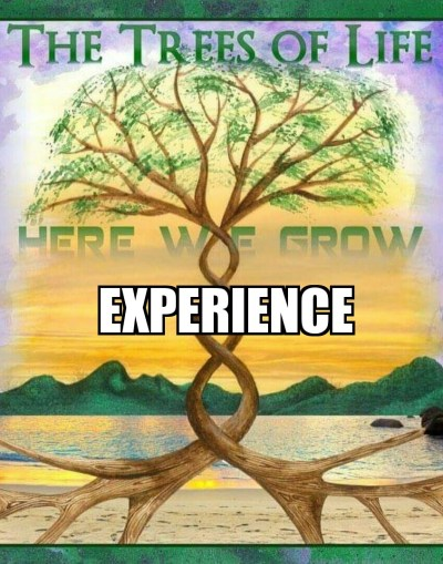 experience-hwg