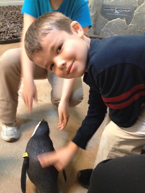 Thomas gets to touch a penguin during our Newport Aquarium penguin encounter