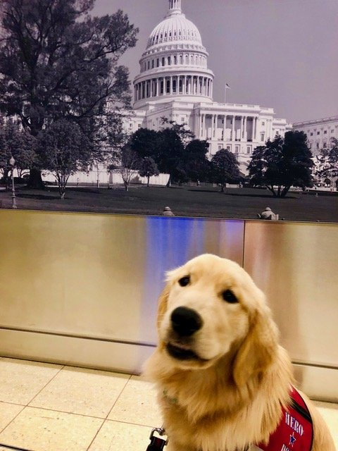 Hero Dogs Captain posting in front of photo of the U.S. Capitol
