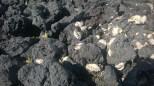 Seaside Volcano