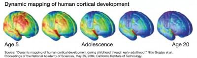 adolescent-brain