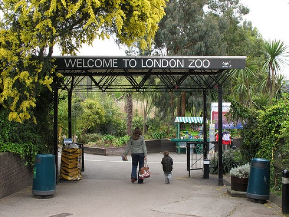 London Zoo - Regents Park - Best Parks in London.
