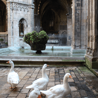 Well of the Geese