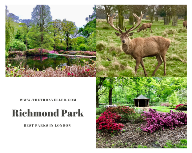 Richmond Park - Best Parks in London.