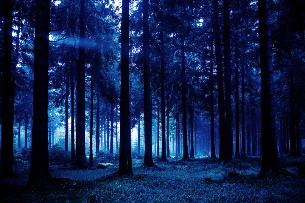 Image of dark, spooky woods of Mayes County