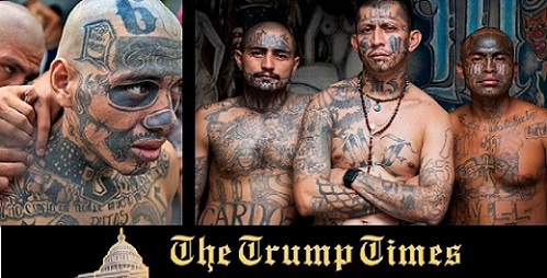 """MS-13 More Like Insects: Don't Insult """"Animals""""!"""