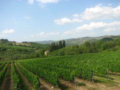 Tuscan winery