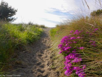 The trail leading to Waikuku Beach - Driving from Christchurch to Marlborough - The Trusted Traveller