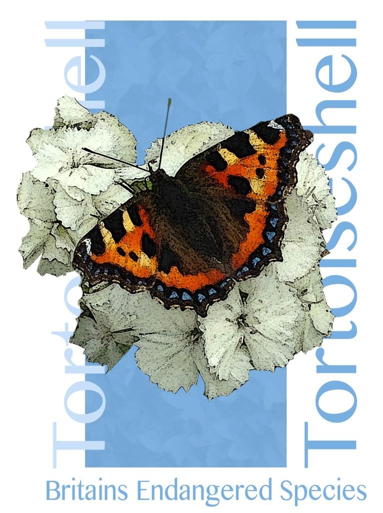 T Butterfly