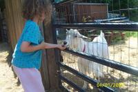Angela_goat