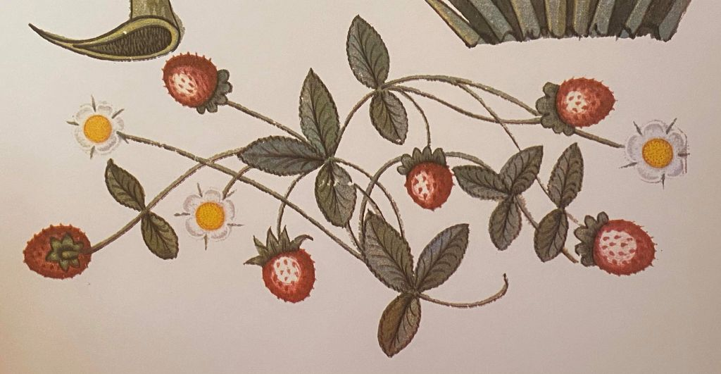 Picture of Tudor strawberries