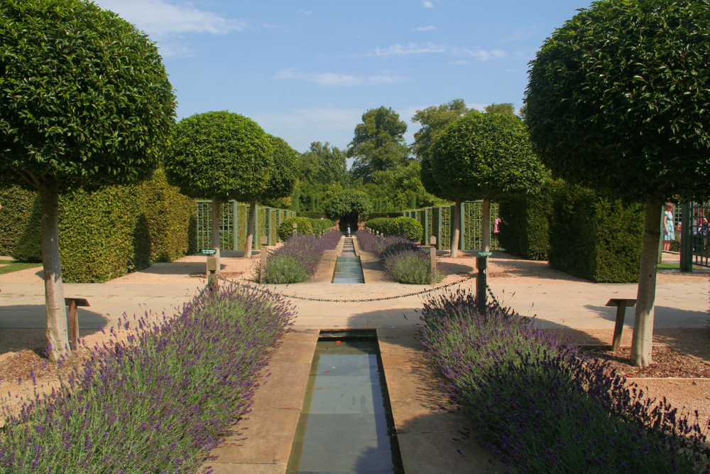 Lavender at Burghley Tudor Times