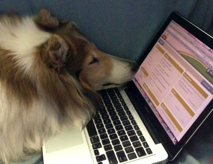Lassie-at-computer