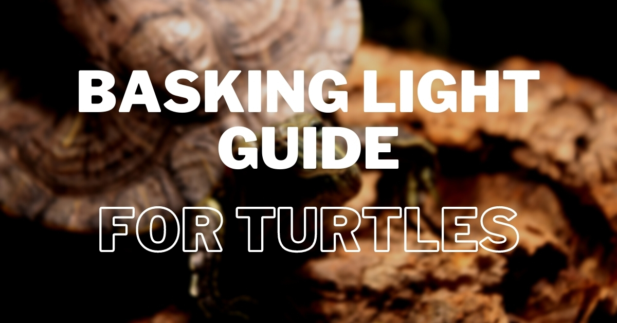 turtle basking light guide for absolute