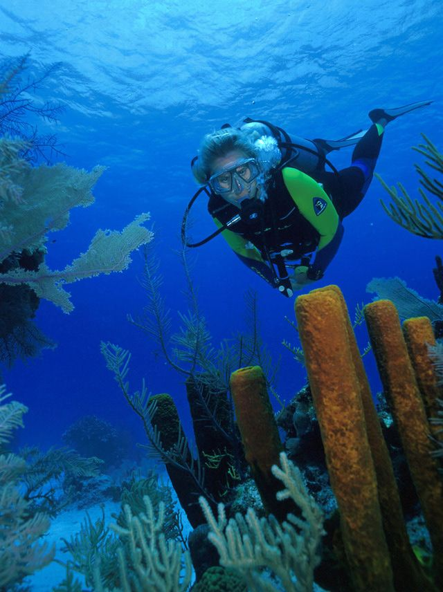 Plunge Into The Best Caribbean Diving Turks And Caicos
