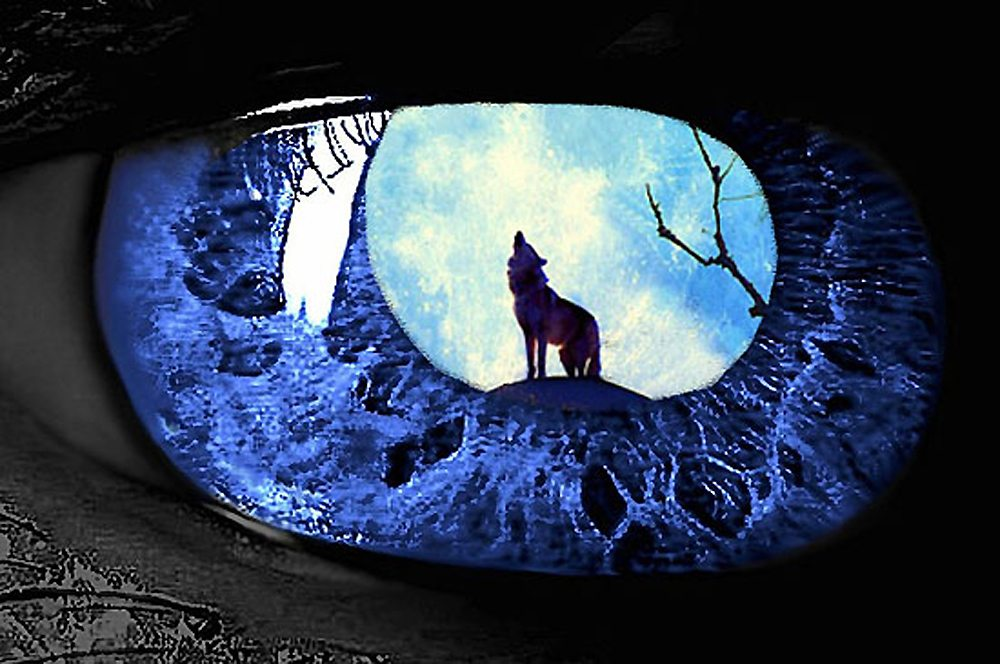 Werewolf Rock Musical-Nothing Bad