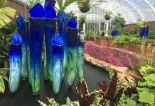 Gorgeous glass art exhibit at Phipps Conservatory and Botanical Gardens in Pittsburgh, PA.
