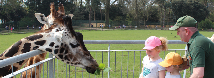 fota wildlife park cork review vip family pass fota wildlife park family pass