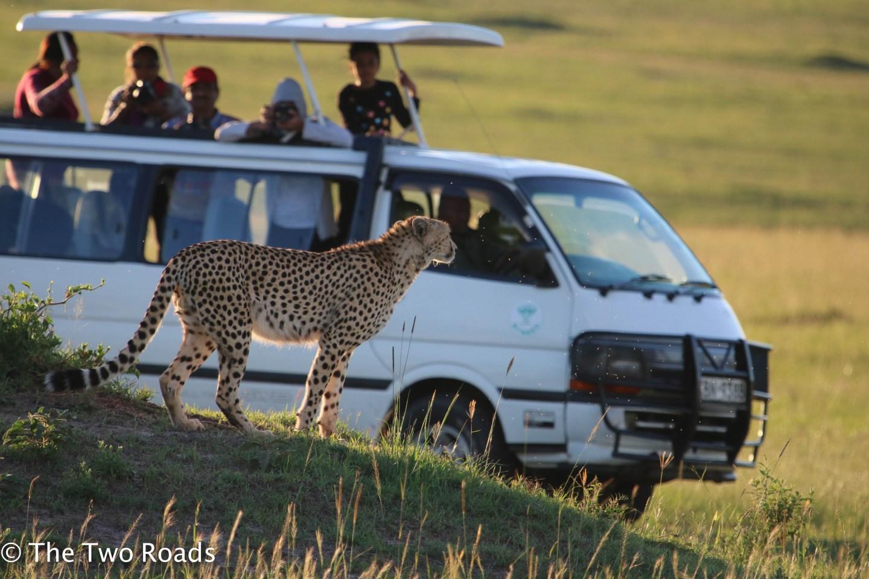 Masai Mara Safari Pictures