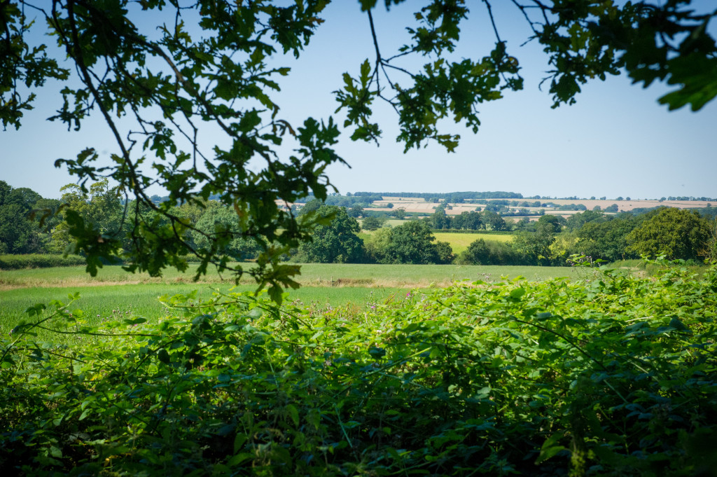 Middle Piccadilly Dorset Countryside Retreat - view from sitting room