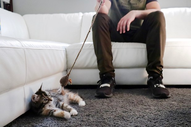 851px version of KittenFeetCouch.jpg