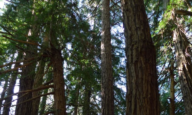 """Four Poems from """"Tree"""" by Fred Wah"""