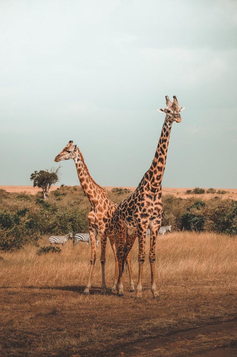 Pre-Travel Diaries: Chasing More African Adventures in Kenya
