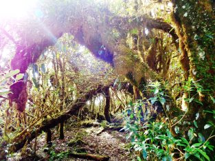 Welcome to the mossy jungle!
