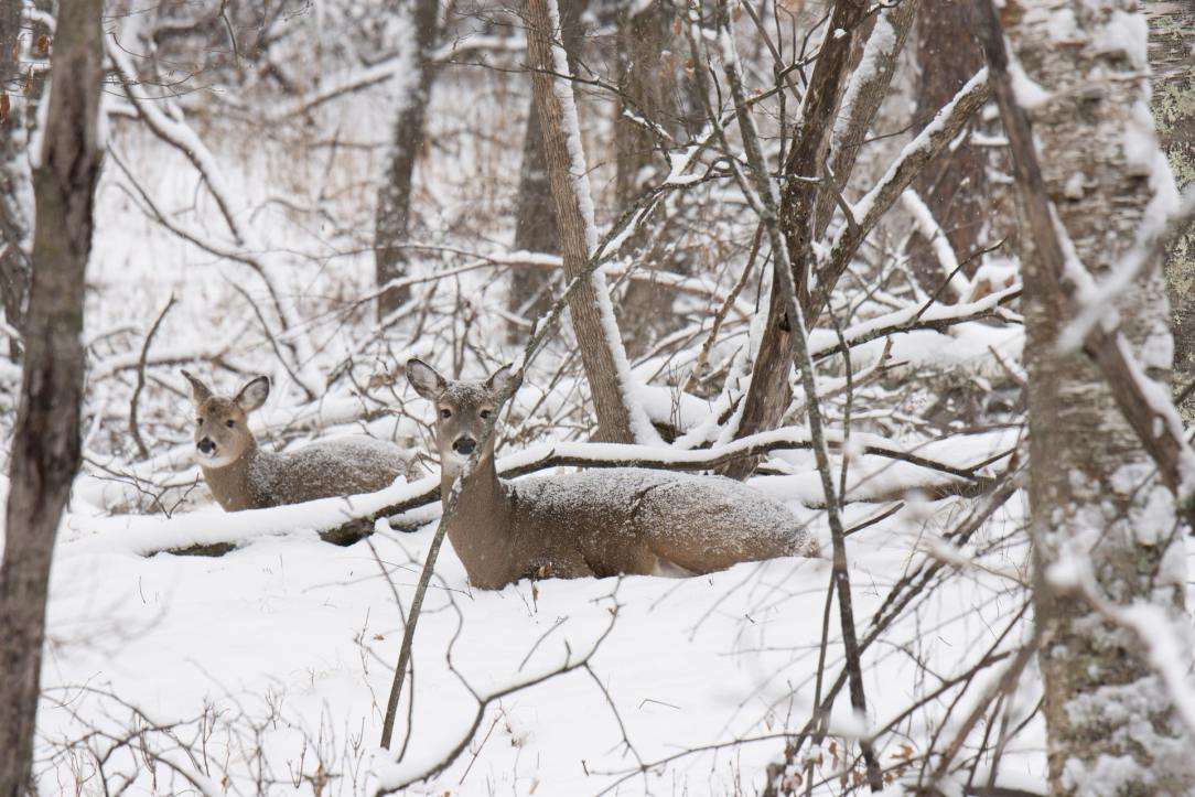 There is no off season: Hunting in a winter wonderland