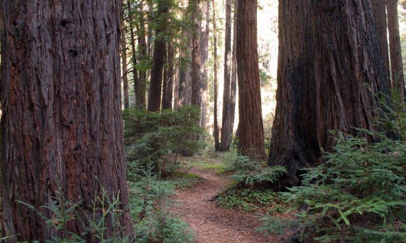 Roadblocks & Waterfalls: Big Sur, California - Gallery Slide #1
